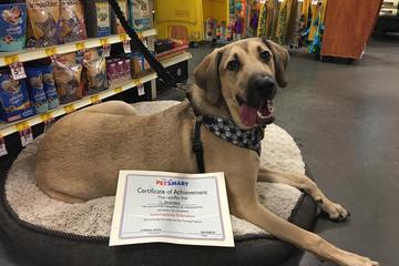 Pet Friendly PetSmart Training