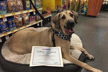 Pet Friendly PetSmart Training