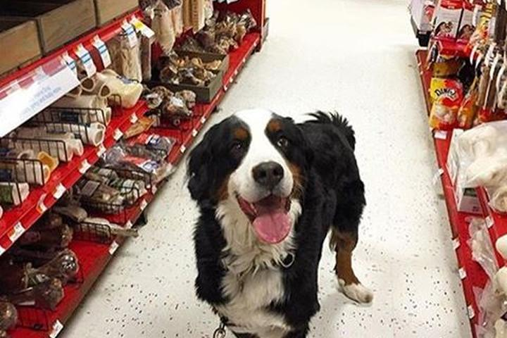 Pet Friendly PETCO Atlanta - Edgewood