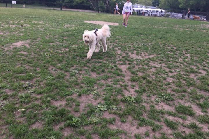 Pet Friendly Big Dog Walkin' LLC