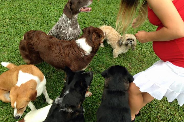 Pet Friendly Happy Wags LLC