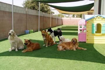 Pet Friendly Pet Sitting Las Vegas