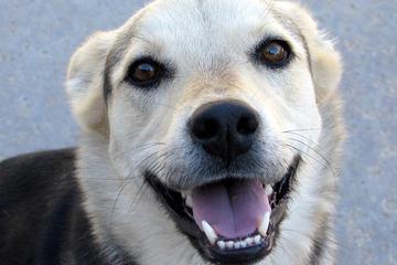 Pet Friendly Pet First Pet Care