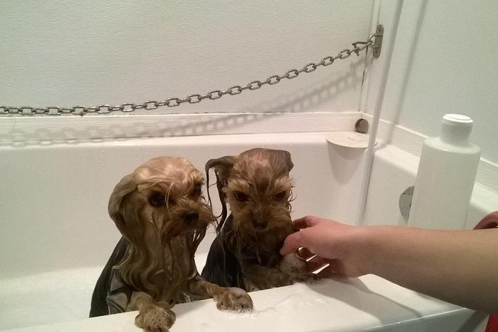 Pet Friendly Mucky Mutt Pet Salon & Bowtique
