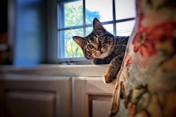 Pet Friendly Critter Sitter Connection