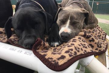 Pet Friendly Camp Run-A-Mutt South Bay