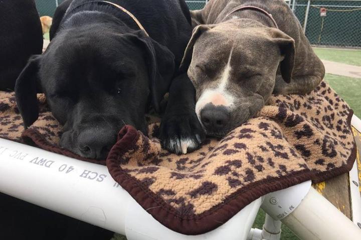 Pet Friendly Camp Run-A-Mutt Los Angeles LAX