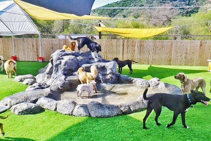 Pet Friendly Camp Run-A-Mutt, Sorrento Valley