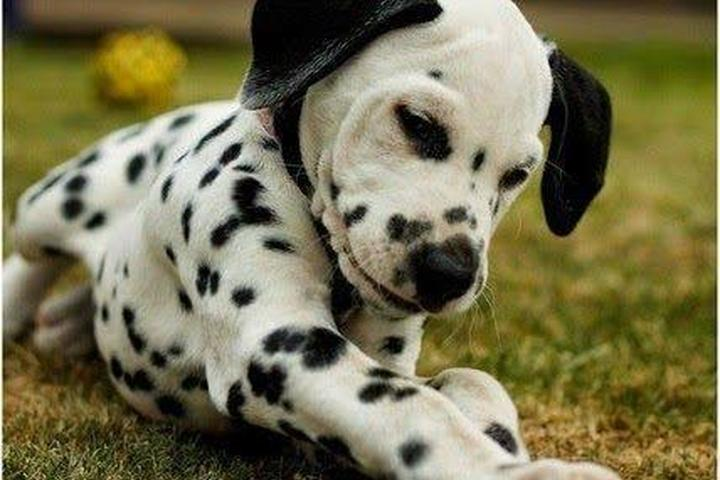 Directory of Doggie Daycare & Boarding in Manassas, VA