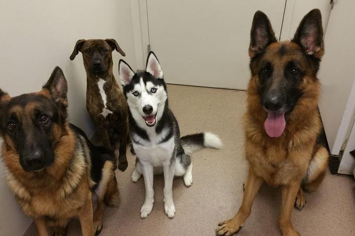 Pet Friendly Martin Downs Animal Hospital