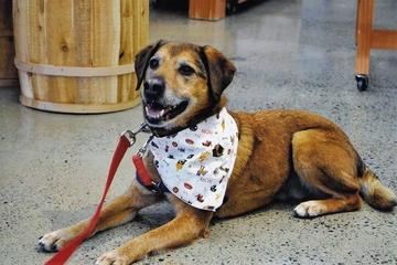 Pet Friendly Project POOCH, Inc.