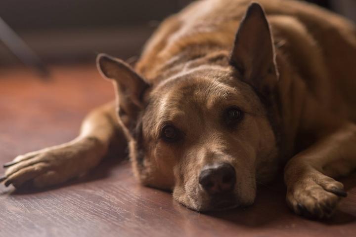 Pet Friendly EM Dash Photography