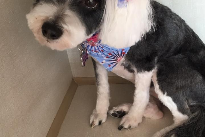 Pet Friendly Pampered Pets Grooming Spa