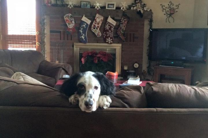Pet Friendly Dog Guard of Hudson Valley, LLC