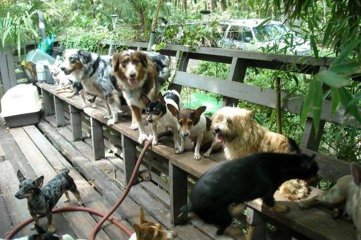 Pet Friendly Bow Wow Bootcamp