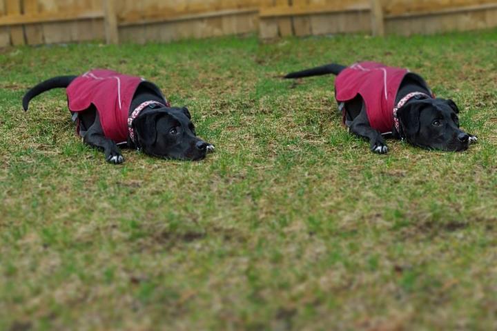 Pet Friendly Tremendous Training