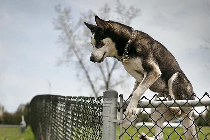 Pet Friendly Pet Playgrounds