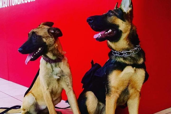 Pet Friendly Master Dog Training L.A.