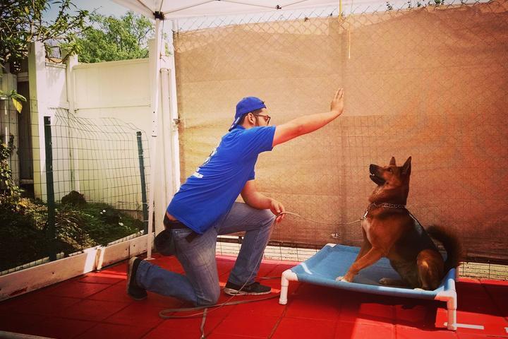 Pet Friendly Master Dog Training