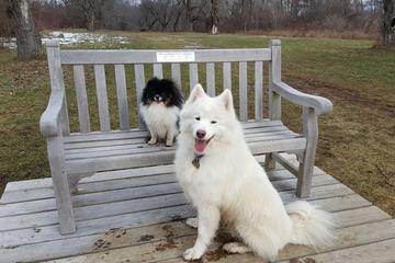 Pet Friendly New England Pet Hospice & Home Care