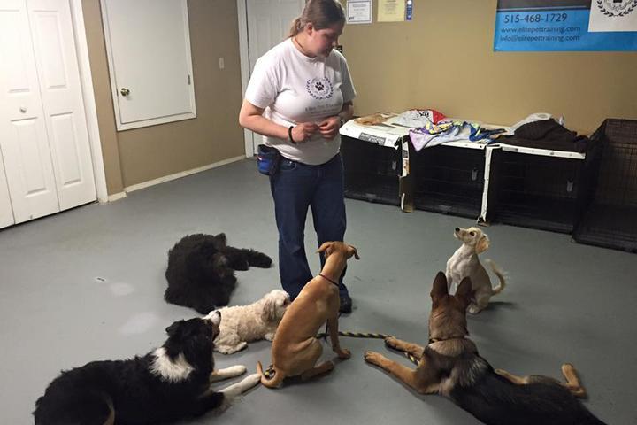 Pet Friendly Elite Pet Training
