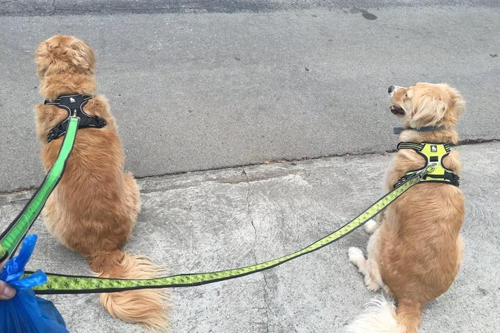 Pet Friendly Pet Service Solutions