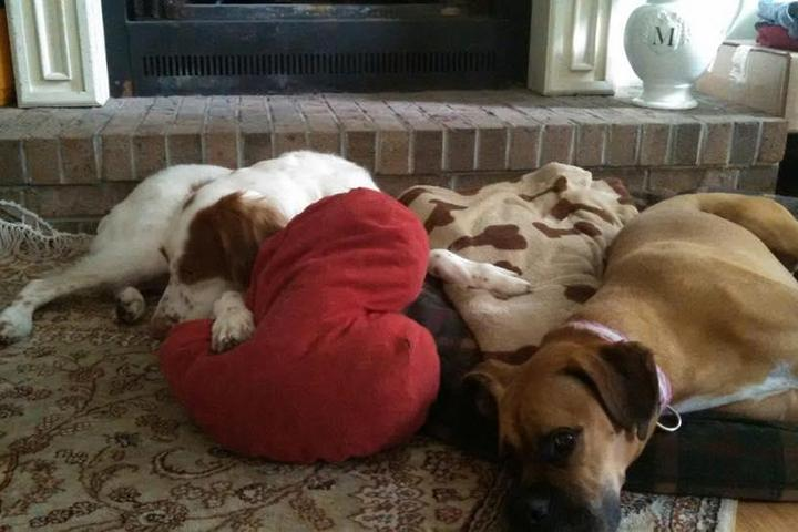Pet Friendly Semper Fido Pet Retreat