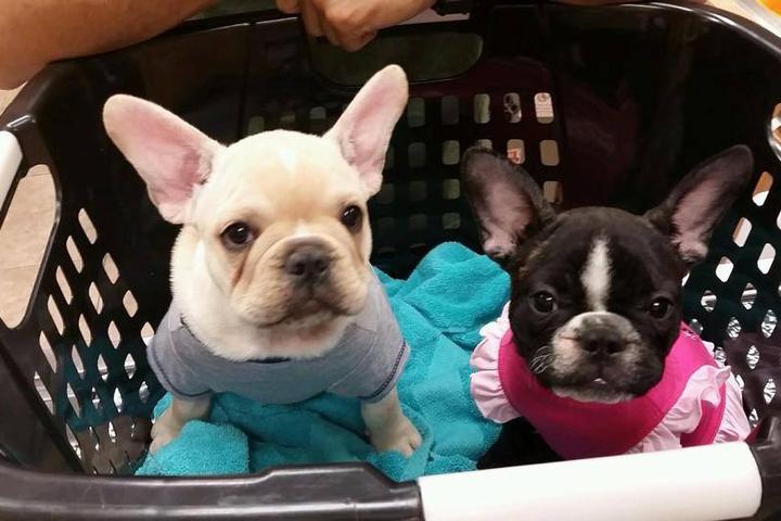 Pet Friendly Companion Animal Hospital & Boarding Center
