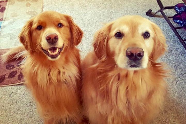 Pet Friendly Carolina Pet Care Services, Inc.