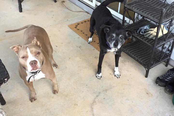Pet Friendly Happy Paws & Pet Pals LLC