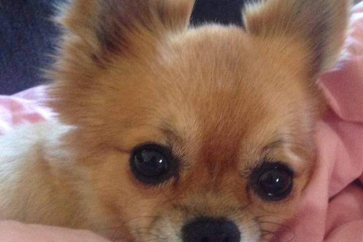 Pet Friendly Alex Canine Care