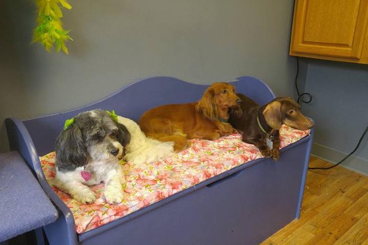 Pet Friendly Pet Bath and Beyond