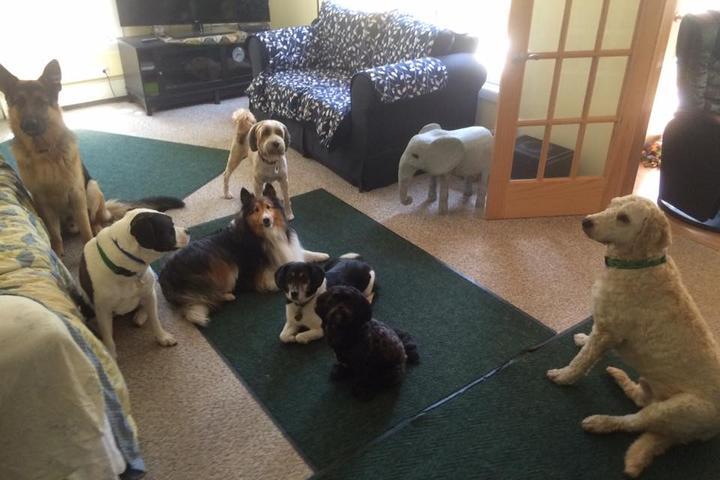 Pet Friendly Acadia Pet Services