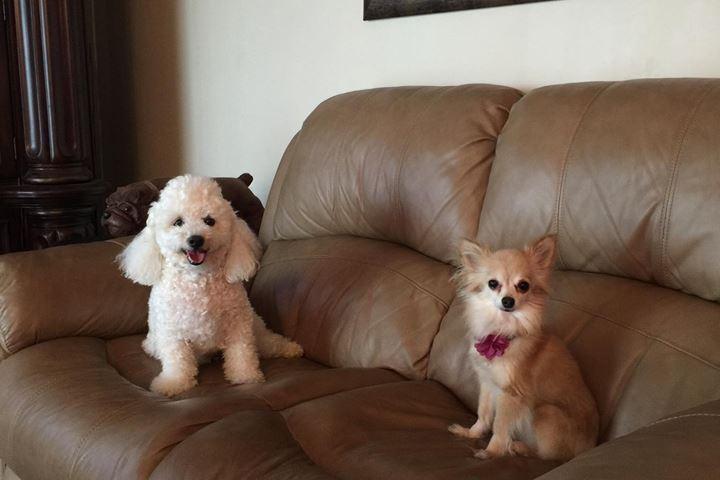 Pet Friendly Royalty Pets