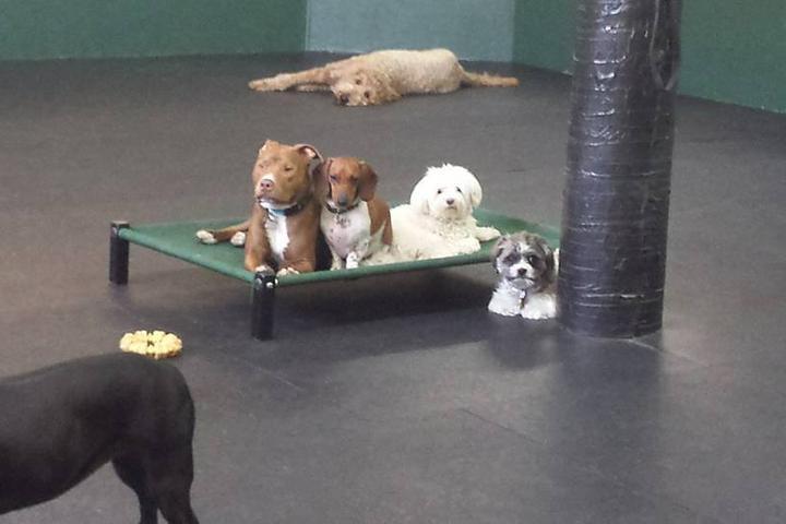 Pet Friendly A Dog's World
