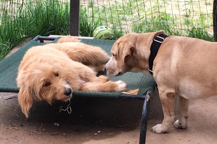 Pet Friendly Beagle Bed & Breakfast