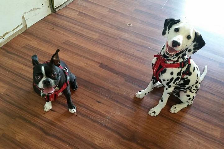 Pet Friendly Wagger's Wayside Dog Training