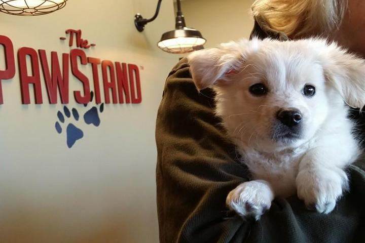 Pet Friendly The PawStand
