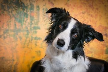 Pet Friendly Asheville Pet Photography