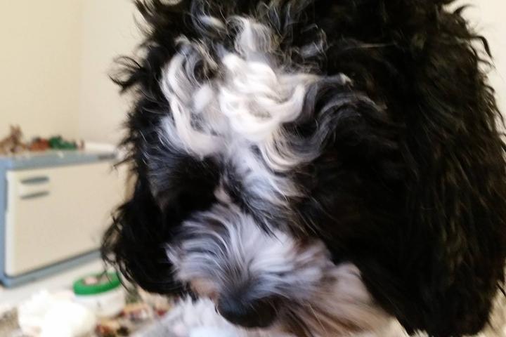 Pet Friendly Loving Dog Luxe