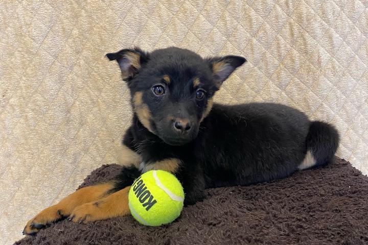 Pet Friendly Love at First Sight! Pet Adoption Center