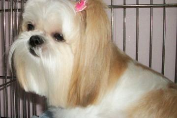 Pet Friendly Joni Grooming Spa - Pet Groomer Boca Raton