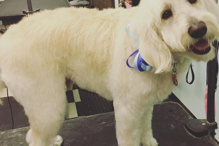 Pet Friendly Holly's Dog Salon & Boutique