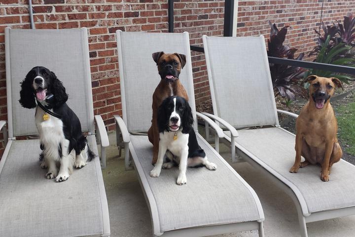 Pet Friendly Sit Happens Jacksonville Dog Training