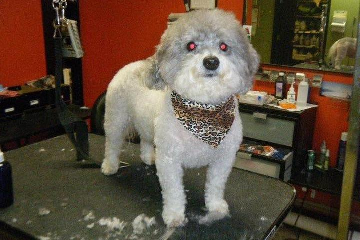 Pet Friendly Million Dollar Dog, Inc.