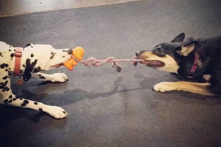 Pet Friendly Tail Wags Playground