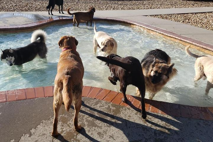Pet Friendly West Chester Pet Resort