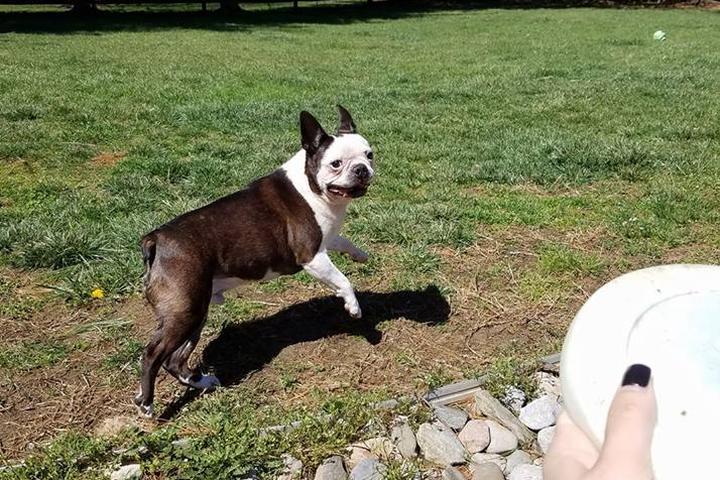 Pet Friendly Prefurred Walker and Pet Sitter, LLC