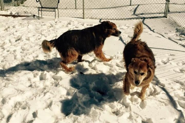 Pet Friendly Mount Tabor Boarding and Grooming