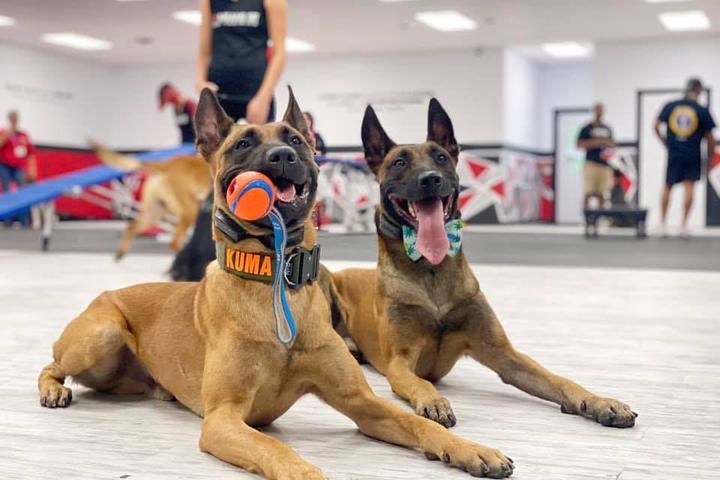 Pet Friendly Sit Means Sit Dog Training Indianapolis